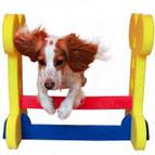 Accessoires de sport pour chien