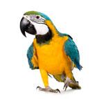 Aliments et accessoires pour oiseaux