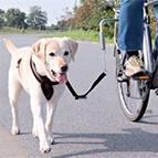 Accessoires de vélo pour chien