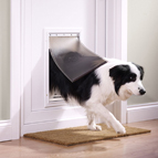 Chatières pour chien