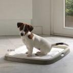 Producten voor het hondentoilet