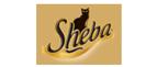 Sheba pâtée pour chat