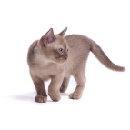 Ofertas para gatos