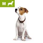 Panier pour chien moyen